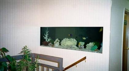 becatreotuong1 Bể cá treo tường theo phong thủy