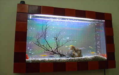 becatreotuong2 Bể cá treo tường theo phong thủy