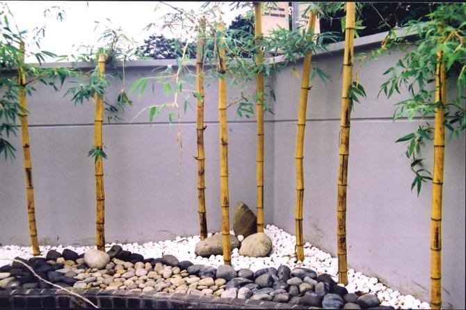 cach chon cay trong hop voi huong san1 Trồng cây theo hướng sân nhà