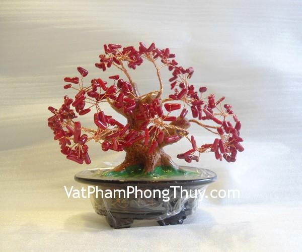 cay tai loc ca223 Cây san hô đỏ tài lộc nhỏ Quảng Đông thịnh vượng sung túc CA223
