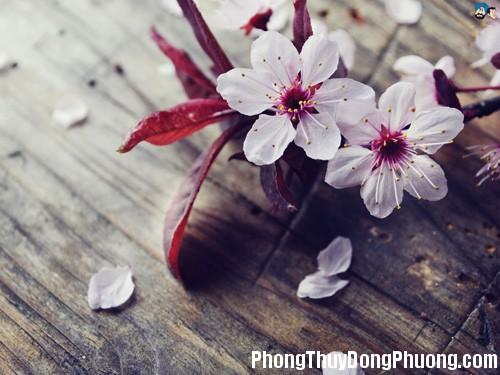 0FD hoapt2 Những loại hoa mang ý nghĩa tốt lành trong phong thủy
