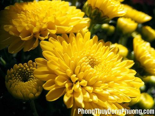 221 hoapt5 Những loại hoa mang ý nghĩa tốt lành trong phong thủy