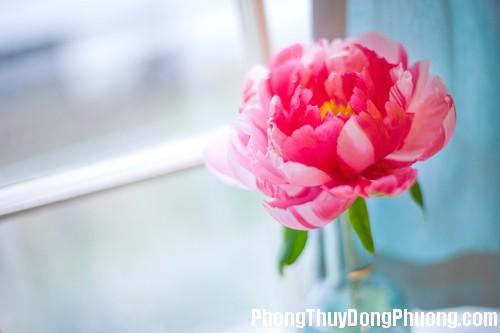 49D hoapt Những loại hoa mang ý nghĩa tốt lành trong phong thủy