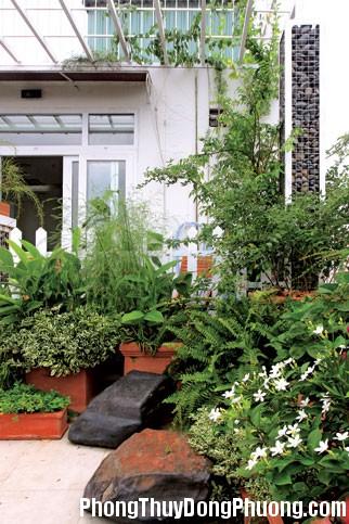 cay xanh trong vuon 2 Tư vấn chọn cây cối phù hợp cho sân vườn