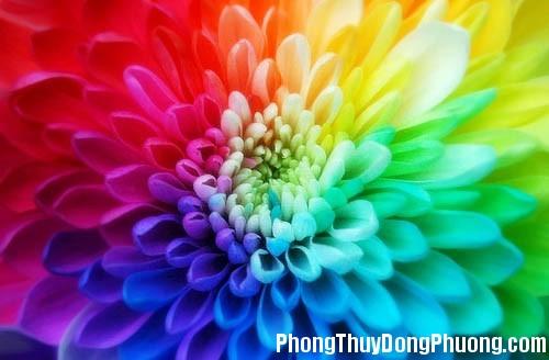 color12 Lựa chọn màu sắc phù hợp với mệnh cung của gia chủ