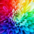 color1(2)