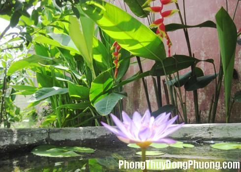 cay xanh va mat nuoc Phong thủy cho cây và nước