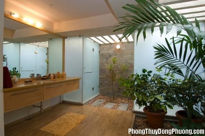 interior courtyard bathroom 665x441 Những loại cây cảnh giúp bạn có được tinh thần tỉnh táo nhất khi làm việc