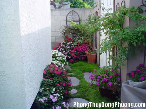 phong thuy Chọn cây xanh phù hợp với nhà ở