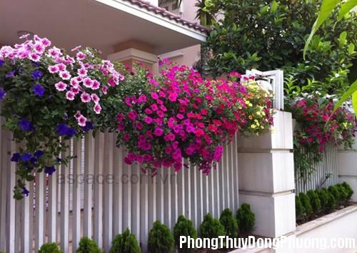 rao hoa 13 Phong thủy bài trí mặt tiền nhà ở