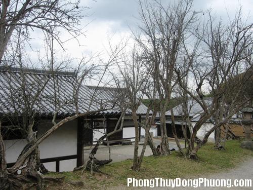 951 v5 Phong thủy cho cây khô trong vườn nhà