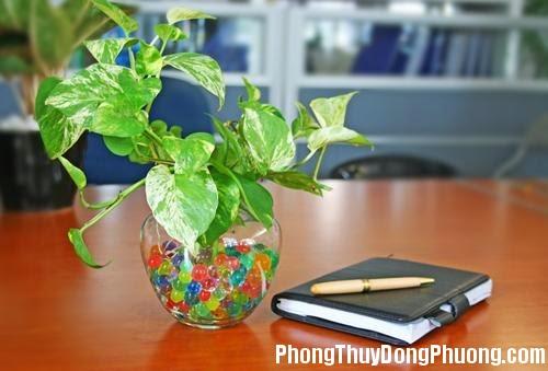 chon cay xanh cho dat lam viec van phong Bài trí cây xanh trên bàn làm việc