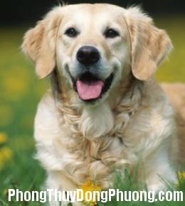 2458 cunyeu Nuôi chó cũng cần phải hợp phong thủy