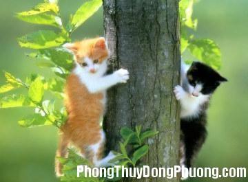 2459 nuoimeo Xác định hướng nuôi cho mèo