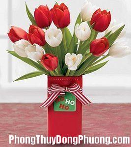 2049 tulip Những loại hoa nên tránh trưng bày trong phòng ngủ