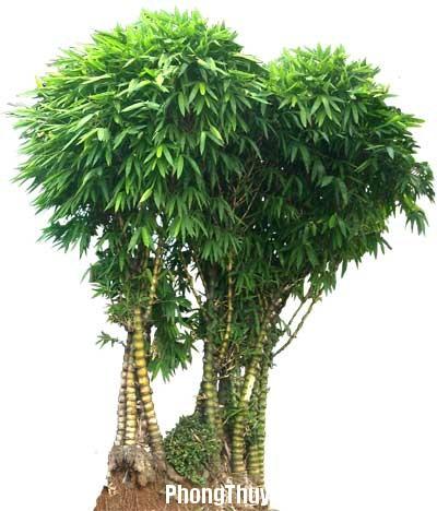 pt2 Bố trí hợp lý cho từng loại cây cảnh trong phong thủy