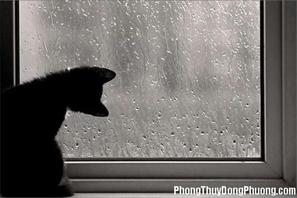 120402goctraitim140 62e70 Giải mã các bí ẩn giấc mơ thấy trời mưa