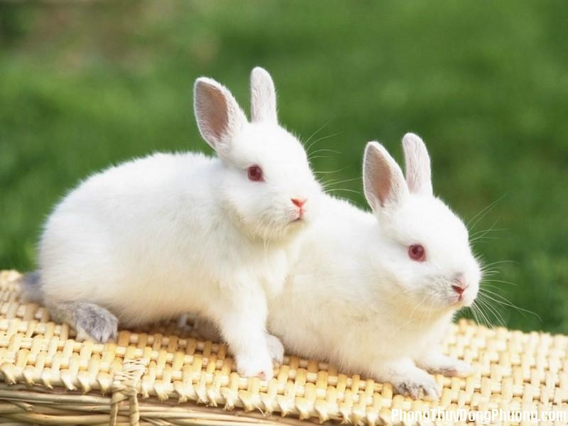 1306461983 nam con tho 15 Giải mã các bí ẩn giấc mơ thấy những con thỏ