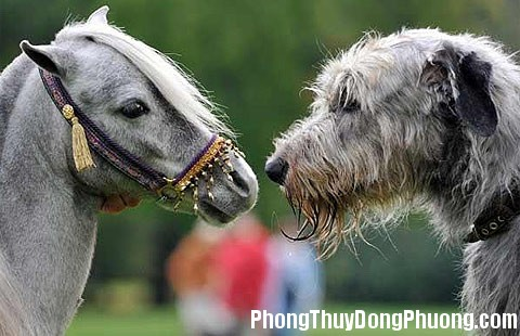 anhdep7 Giải mã các bí ẩn giấc mơ thấy ngựa và chó