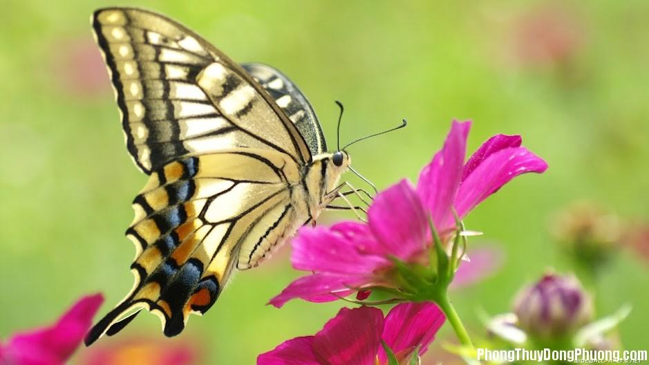 buom Giải mã các bí ẩn giấc mơ thấy con bướm