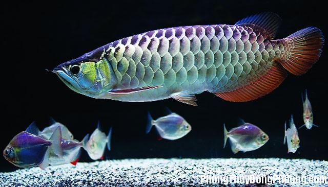 ca Giải mã các bí ẩn giấc mơ thấy hình ảnh con cá