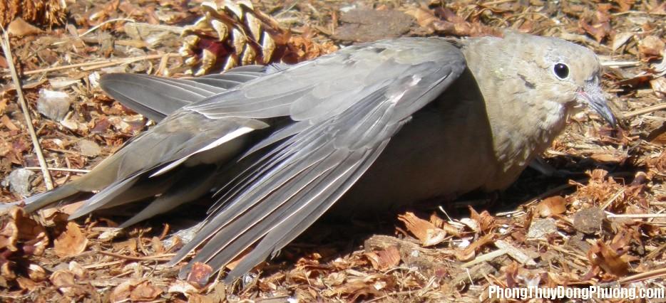 canh chim Giải mã các bí ẩn giấc mơ thấy con chim bị gãy cánh