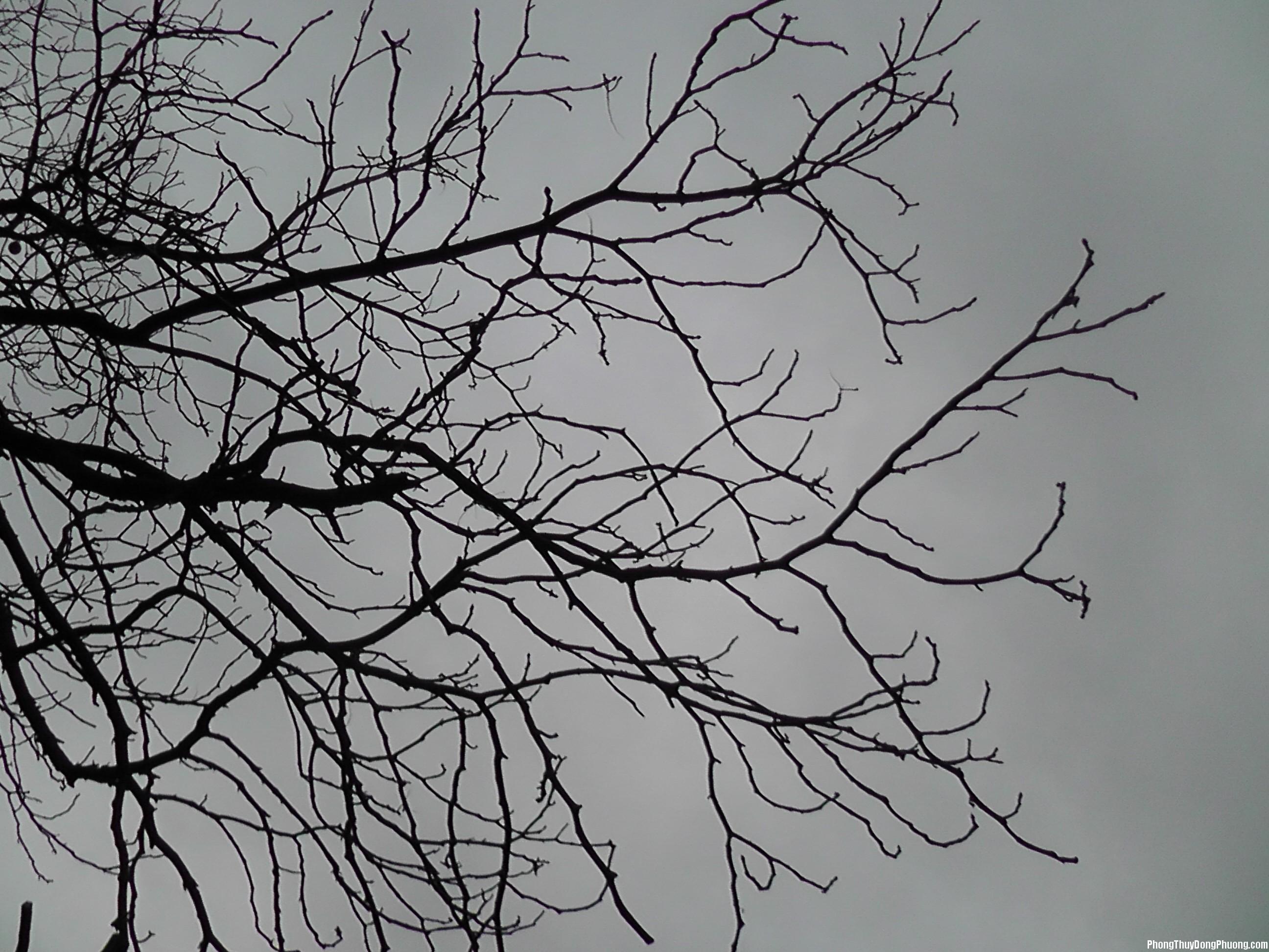 cay kho Giải mã các bí ẩn giấc mơ thấy gặp cành cây khô