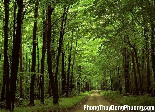 cay Giải mã các bí ẩn giấc mơ thấy rừng cây cối