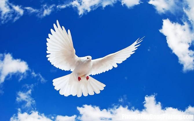chim bo cau Giải mã các bí ẩn giấc mơ thấy con chim bồ câu