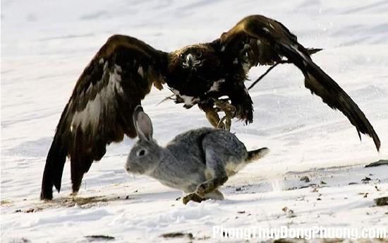 chim ung Giải mã các bí ẩn giấc mơ thấy con chim ưng đang săn mồi