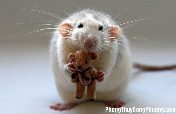 chuot Giải mã các bí ẩn giấc mơ thấy con chuột