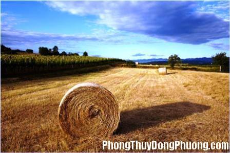 co kho Giải mã các bí ẩn giấc mơ thấy đồng cỏ khô