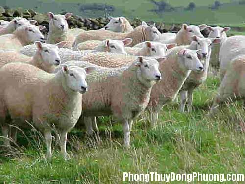 con cuu Giải mã các bí ẩn giấc mơ thấy hình ảnh con cừu