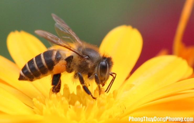 con ong Giải mã các bí ẩn giấc mơ thấy hình ảnh con ong