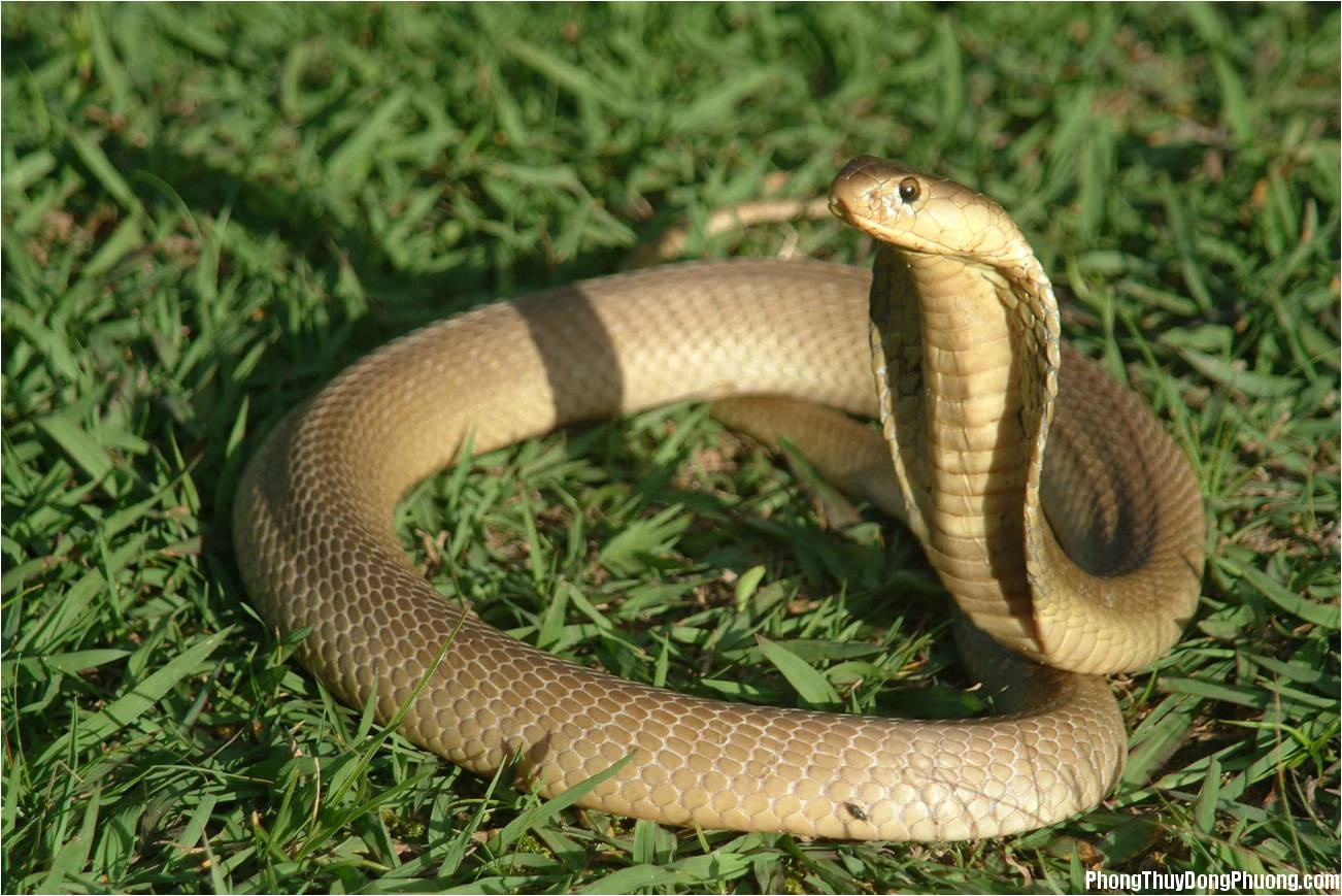 con ran Giải mã các bí ẩn giấc mơ thấy có con rắn