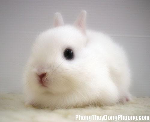 con tho Giải mã các bí ẩn giấc mơ thấy hình ảnh chú thỏ