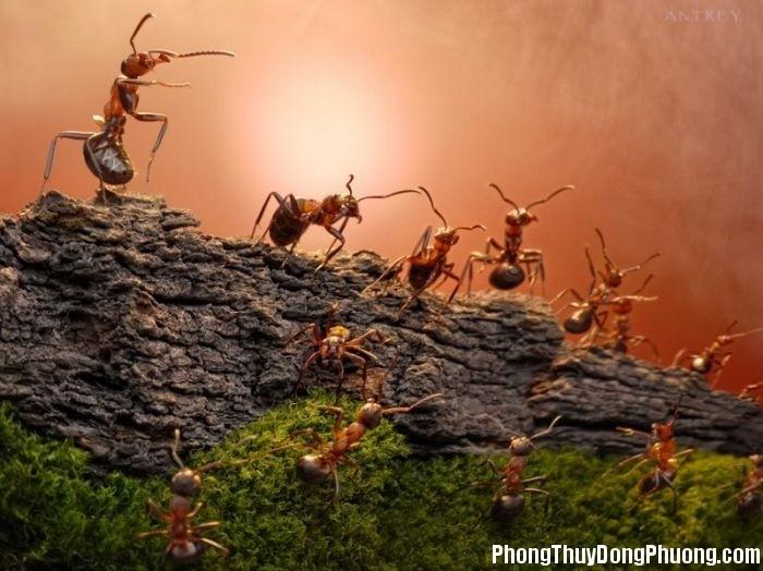 dan kien Giải mã các bí ẩn giấc mơ thấy một đàn kiến