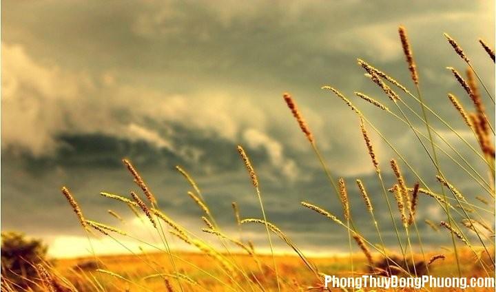 gio Giải mã các bí ẩn giấc mơ thấy gió mát dịu nhẹ