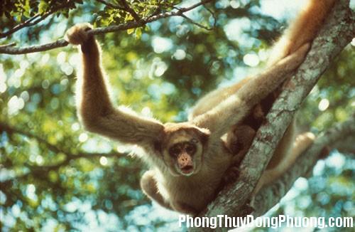 khi Giải mã các bí ẩn giấc mơ thấy con khỉ