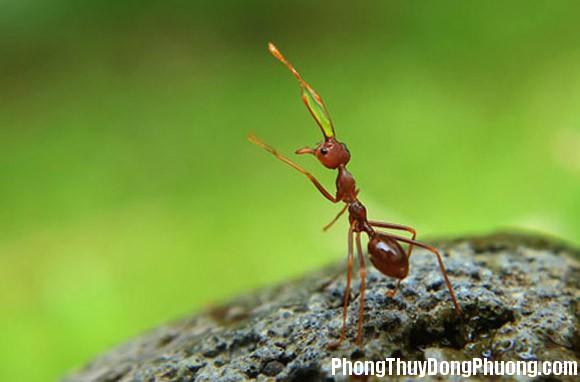 kien Giải mã các bí ẩn giấc mơ thấy con kiến