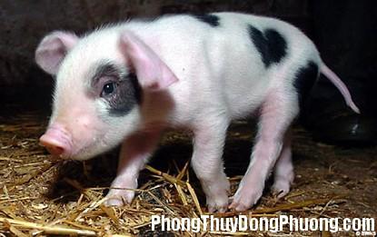 lon Giải mã các bí ẩn giấc mơ thấy lợn