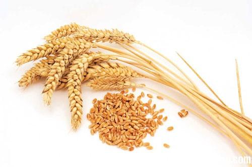 lua mi Giải mã các bí ẩn giấc mơ thấy hạt lúa mì
