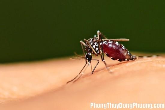 muoi Giải mã các bí ẩn giấc mơ thấy hình ảnh con muỗi