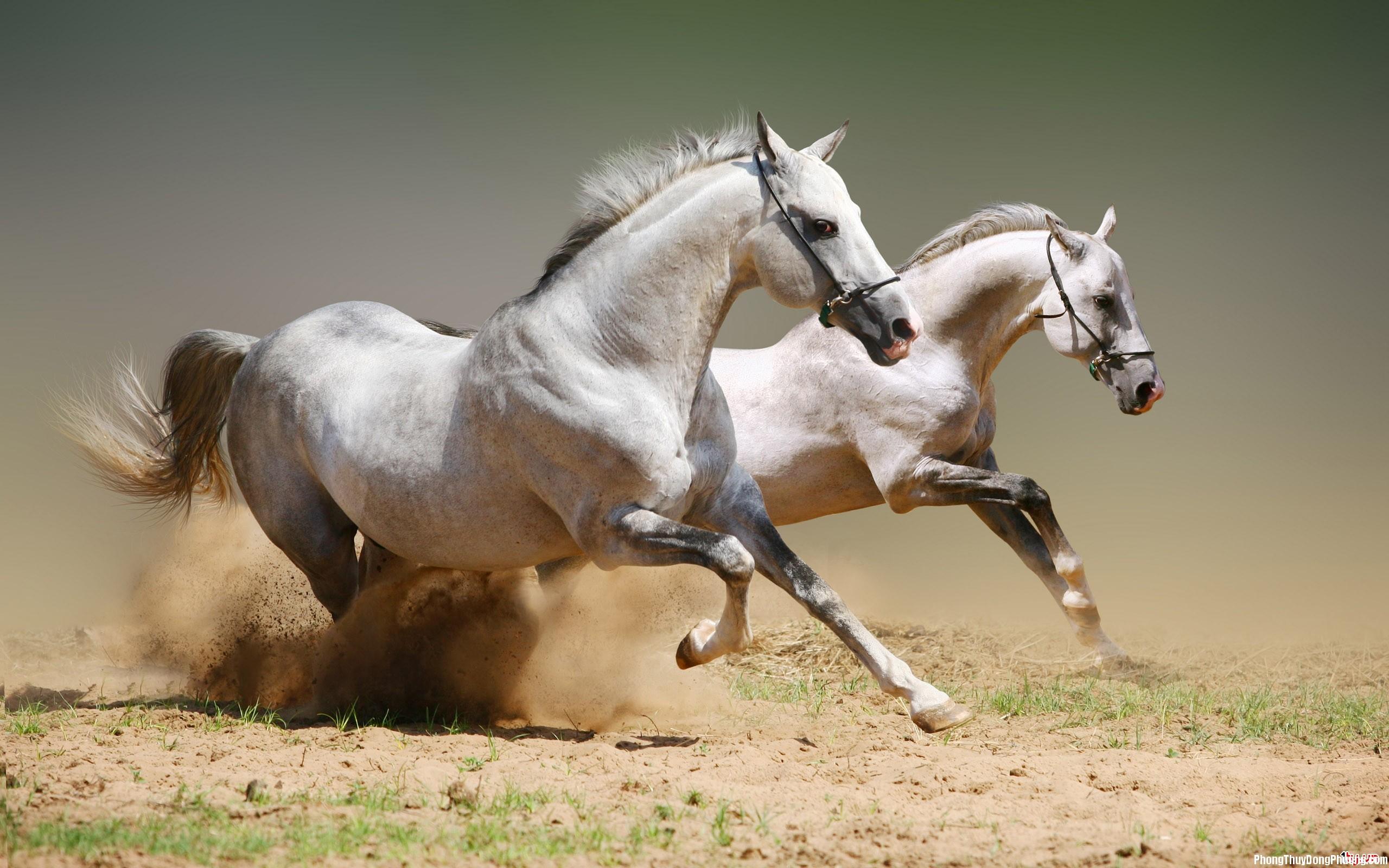 ngua Giải mã các bí ẩn giấc mơ thấy ngựa
