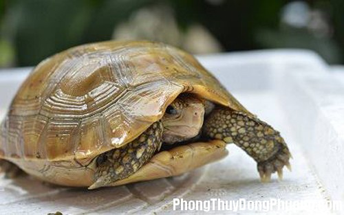 rua Giải mã các bí ẩn giấc mơ thấy hình ảnh con rùa