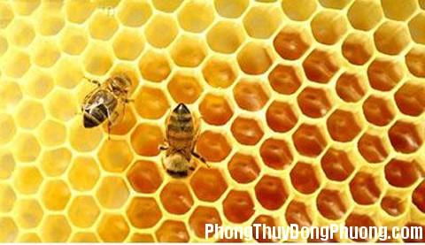 to ong Giải mã các bí ẩn giấc mơ thấy con ong
