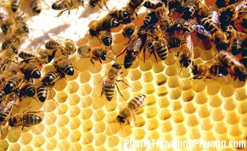 to ong1 Giải mã các bí ẩn giấc mơ thấy một tổ ong
