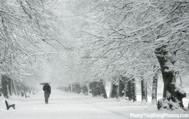 tuyet Giải mã các bí ẩn giấc mơ thấy tuyết trắng