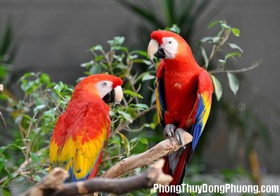 vet Giải mã các bí ẩn giấc mơ thấy con chim vẹt