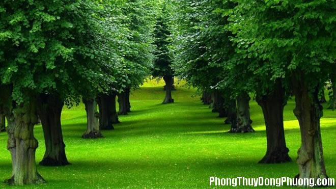 vforum.vn 132741 hinh anh cay xanh dep va an tuong 188 6 Giải mã các bí ẩn giấc mơ thấy cây cối